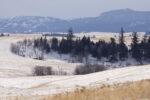 Douglas Plateau grasslands - Alan Burger