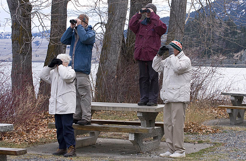 Merritt birders using park benches to get a better view while scanning Nicola Lake for waterbirds.  Photo © Corey Burger