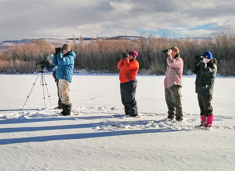 Scanning for birds on the frozen edge of Nicola Lake, 20 December 2015. Photo: ©Corey Burger