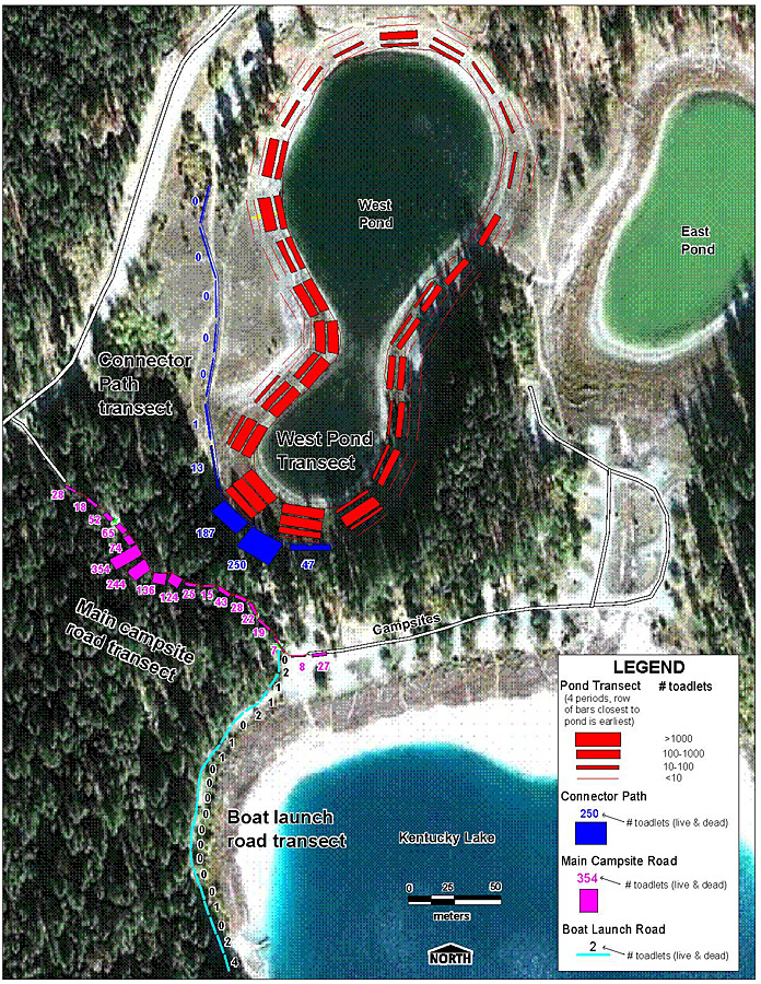 Map of the ponds and lakes in Kentucky-Alleyne Provincial Park showing the concentrations of Western Toad toadlets along the shores of Western Pond (red bars), where they crossed the hiking trail (blue bars) and where they crossed the road (purple bars). The thickness of the bars indicates the number of toadlets at different census visits.