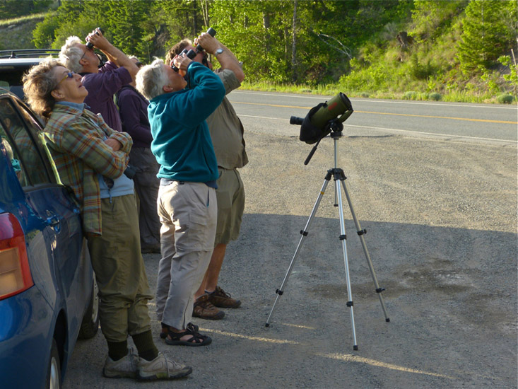 Scanning the Nicola Lake cliffs for Peregrine Falcons.  Photo:  © Kate Hill