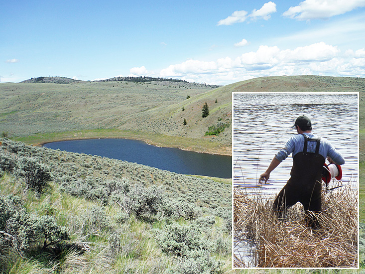 Grassland ponds, such as this, provide critical habitat for many rare species, as well as watering holes for ranchland cattle and wildlife. Photos: © Aaron Coelho