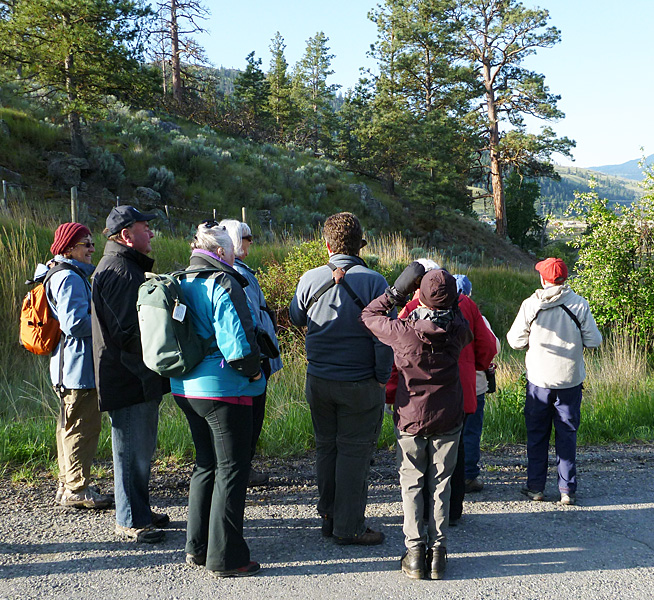 Birders scan the Ponderosa Pines near Nicola village on a pre-breakfast birding walk.  Photo: © Alan Burger