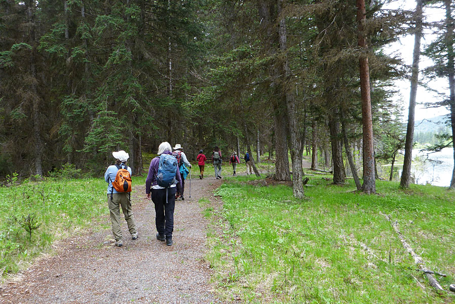 BC Nature camp participants on one of the trails in the Harmon Interpretive Forest, Kane Valley. Photo: © Alan Burger