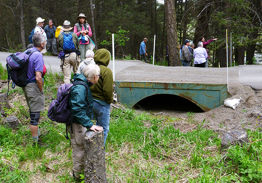 This enviro-culvert was installed by BC Parks to reduce roadkill of migrating Western Toads at Kentucky-Alleyne Provincial Park. Photo: © Alan Burger