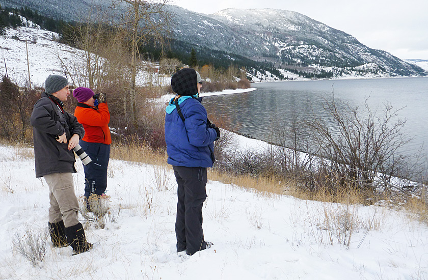 Birding on the south side of Nicola Lake, 20 Dec 2015. Photo: Alan Burger