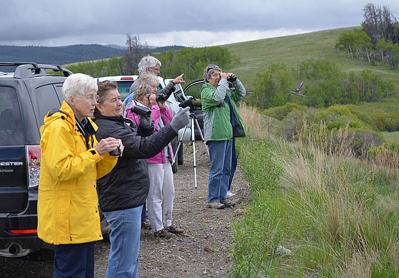 Nicola Naturalist birders in the grasslands near Merritt, 2nd June 2013.  Photo © Bob Scafe